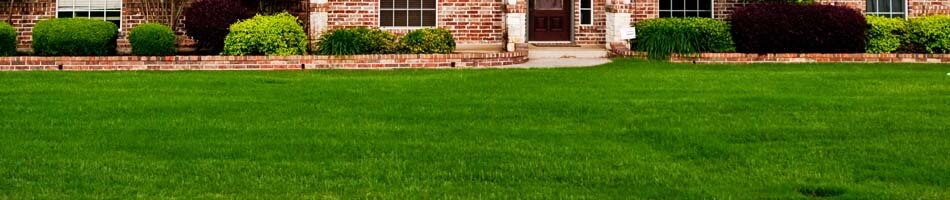 Dark green yard from fertilizing in Saint Petersburg, FL.